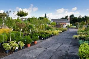 Tuinplanten Utrecht